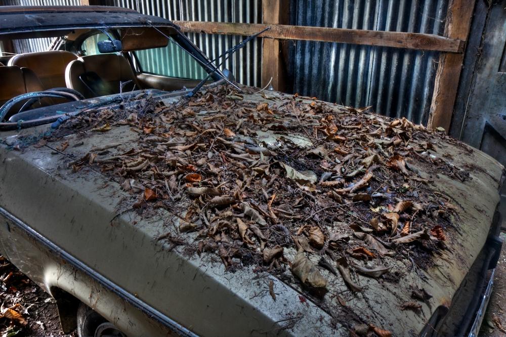 Ford Capri in decay (4/6)