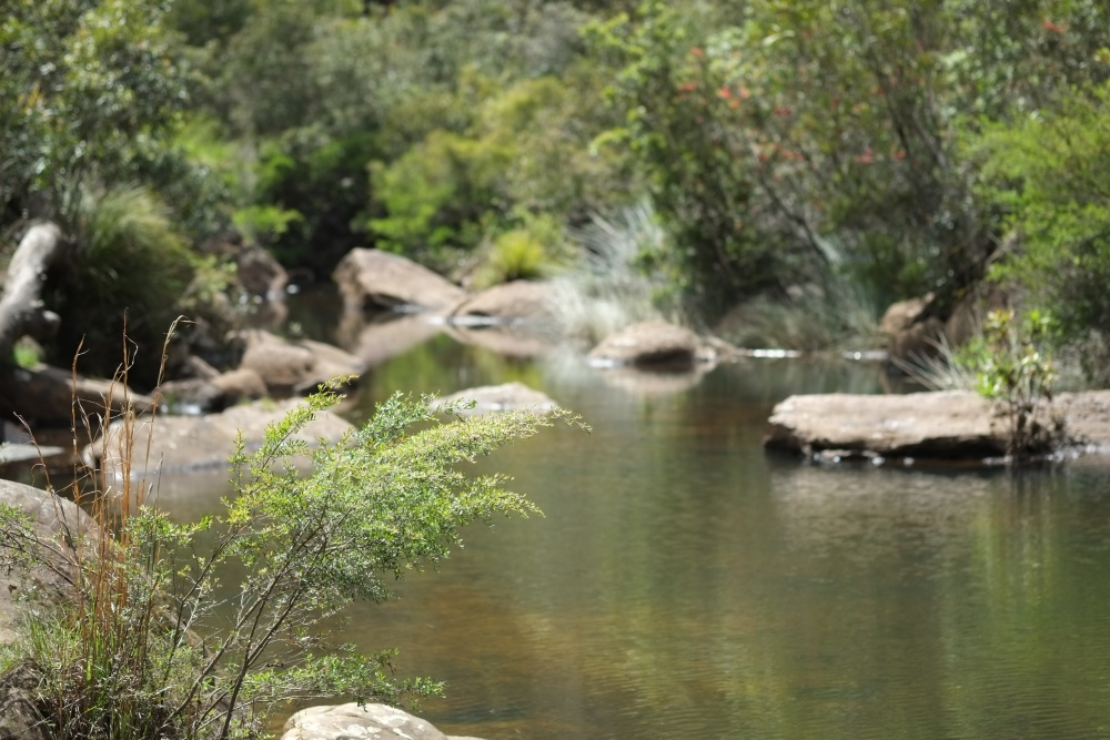 Swimming holes and exploration (2/6)