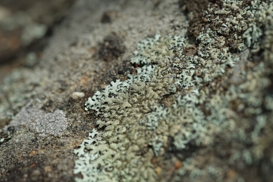 Lichen at Jellybean pool - Fujifilm X-E1 + XF60mmF2.4 Macro