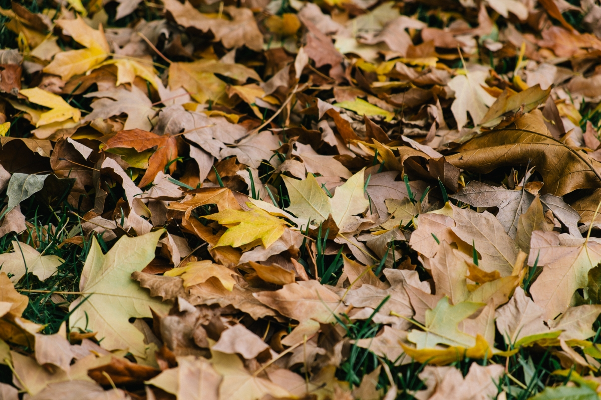 Autumn-9